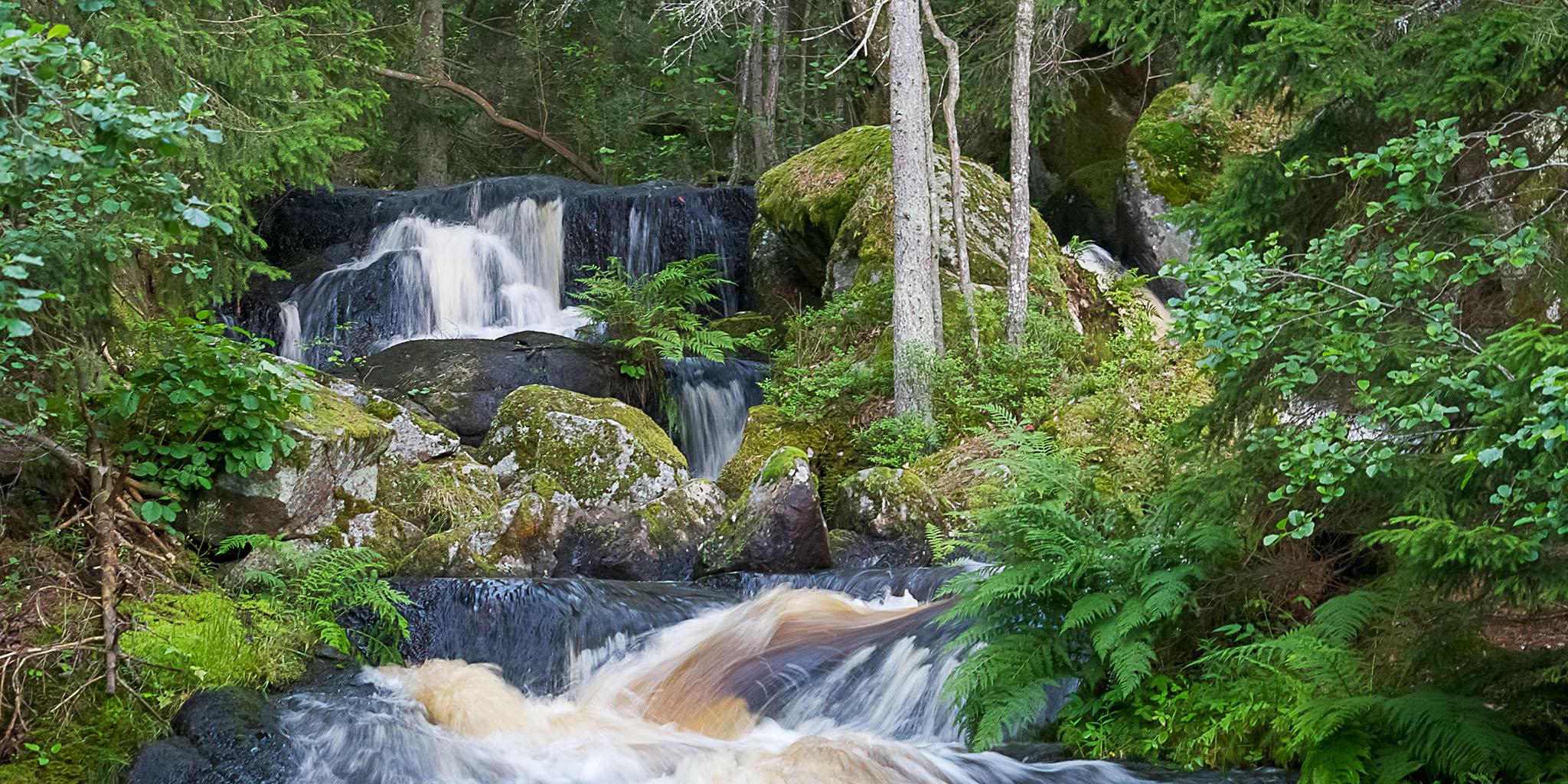 Vatten rinner genom grönskande skog